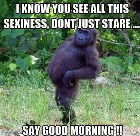 Funny good morning