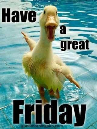 funny animals for a crazy big Friday