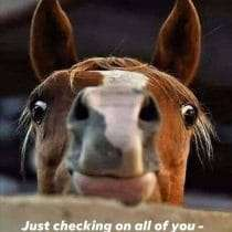Good morning funny horse